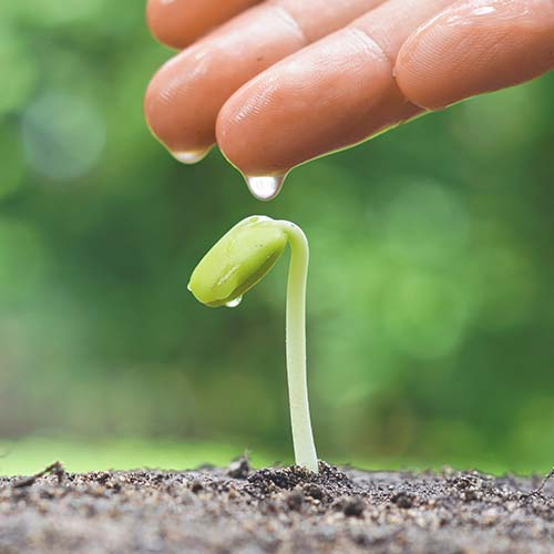 sarah-leishman-mmft-therapy-individual-hands-watering-plant-02